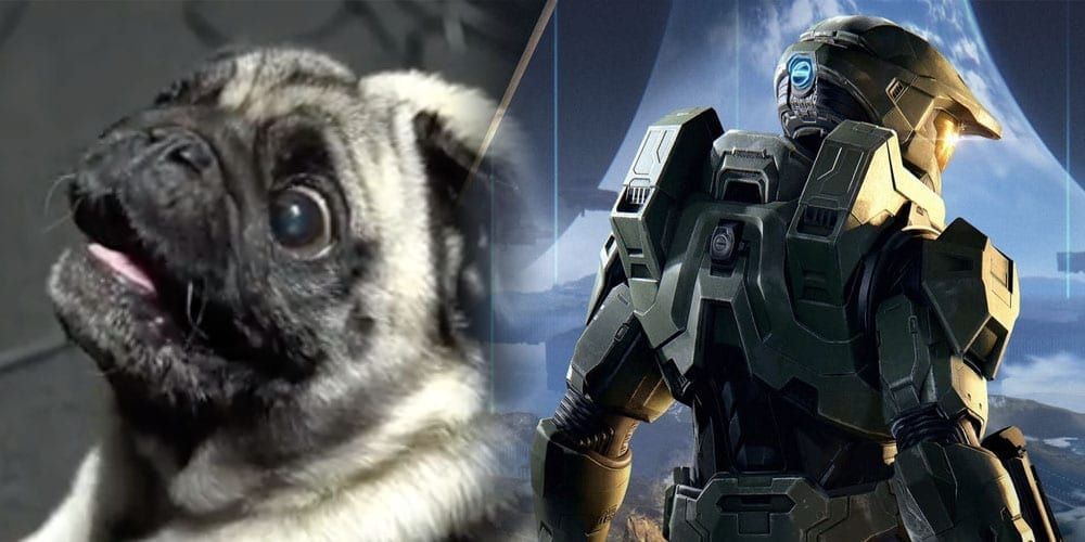 A Pug Has Been Hired By 343 Industries To Make Alien Sounds For Halo Infinite