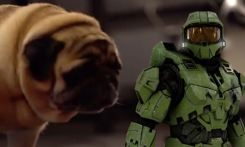 pug and master chief