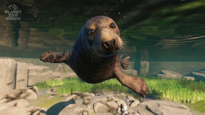 seal planet-zoo-aquatic-pack